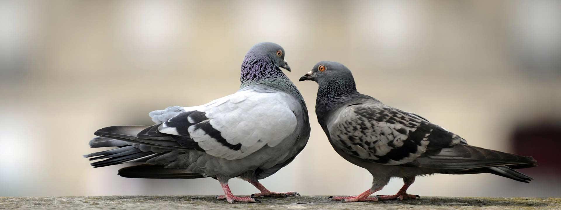 Nettoyage Fiente Pigeons Decapage Pulverisation Produits
